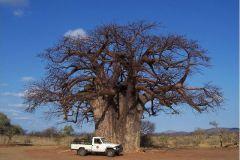 Big-ish_Tree