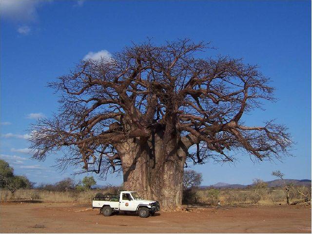 Big-ish Tree