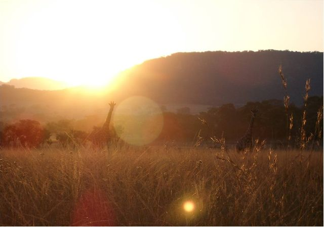 Zimbabwean Sunset
