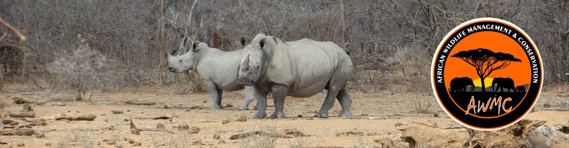 African Wildlife Management & Conservation